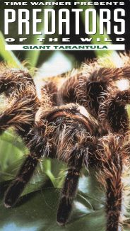 Predators of the Wild: Giant Tarantula