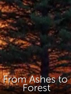 From Ashes to Forest