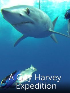 A Guy Harvey Expedition