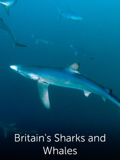 Britain's Sharks and Whales