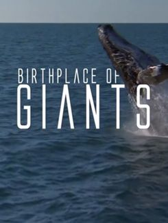 Birthplace Of The Giants