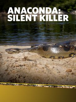 Anaconda: Silent Killer