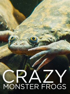 Crazy Monster Frogs