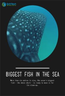 Biggest Fish in the Sea