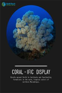 Coral-ific Display