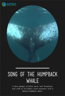 Song of the Humpback Whale