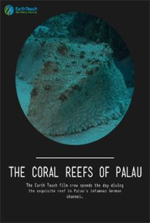 The Coral Reefs of Palau