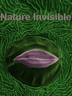 Nature invisible